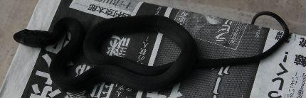H191009 karasuhebi005